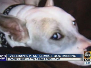 PHX family searches for service dog for soldier