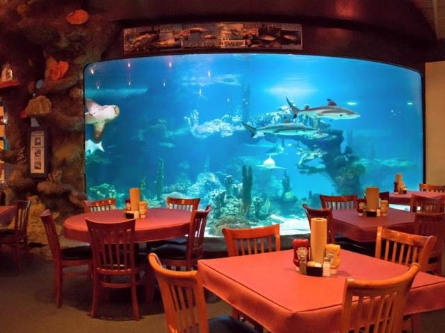 Unique Restaurants Part - 17: ABC 15: Unique Restaurants In Phoenix: 8 Places To Dine With Animals In The  Valley