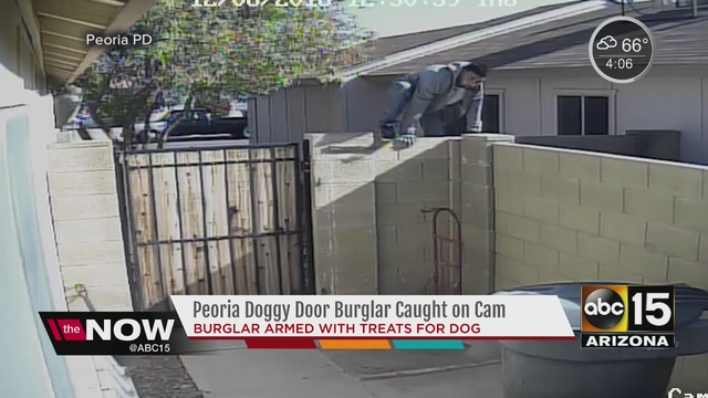 the burglar was even armed with treats for the dog