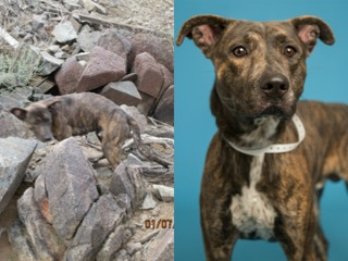 Dog rescued from PHX trail ready to be adopted