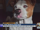 Phoenix family searching for missing blind dog