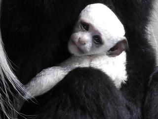 Meet Cincinnati Zoo's first baby of 2017