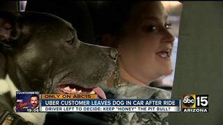Valley Uber driver adopts dog left in her car