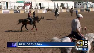 Half off at Scottsdale Arabian Horse Show
