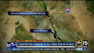 Up to 1,000 feral swine to be eradicated in AZ