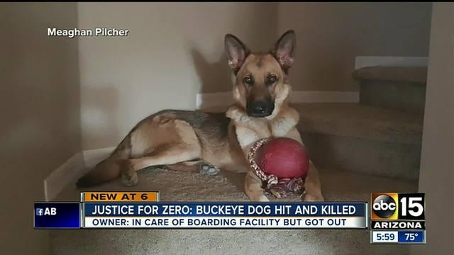 Owner- Buckeye dog hit- killed while at boarding facility