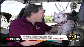 ABC15's 'Molly the Flying Dog' passes away
