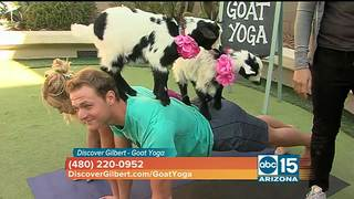 Discover Gilbert - Goat Yoga