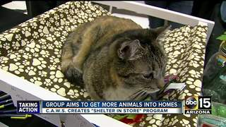 Groups expanding adoptable pets in Valley stores