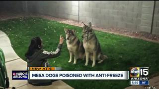PD investigating dogs poisoned with antifreeze