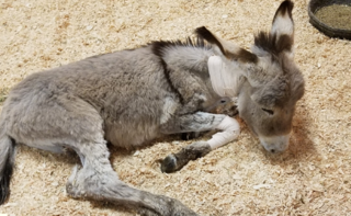 Surprise woman helps injured burro after attack