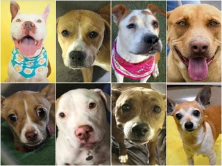 50 adoptable pets in the Valley