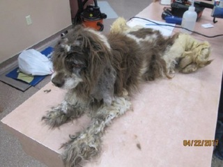 Horse, dog found neglected at Queen Creek home