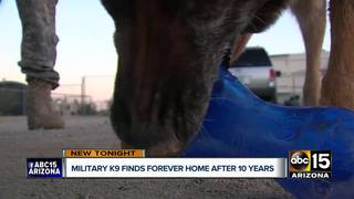 Military K9 retires, reunites with owner