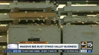 Massive bee bust hits Valley business