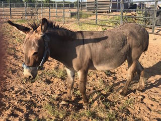Stray donkey found wandering Yuma alone