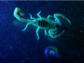 Beware! Summertime is scorpion time in AZ