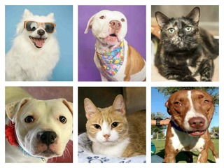 35 adoptable pets in the Valley now