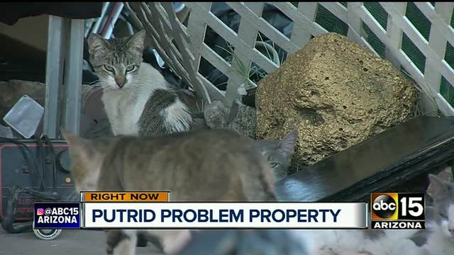 Groups scramble to help 40 cats left at hoarder home