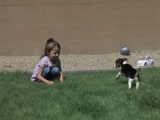 Dog reunited with Laveen family after stolen