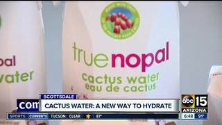 Cactus water: the new coconut water?
