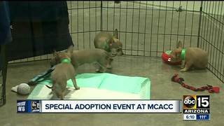 MCACC waiving adoption fees July 1 & 2