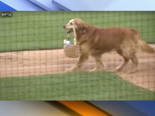 VIDEO: Dog delivers water to baseball umpires