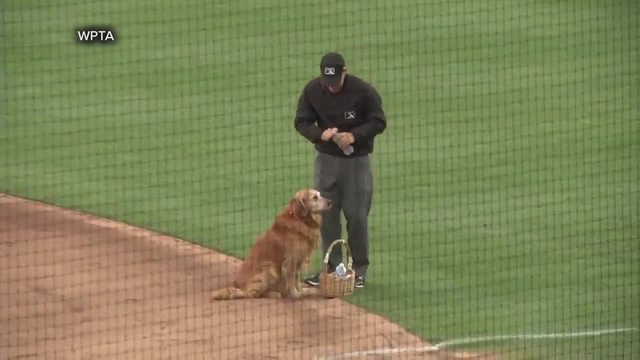 Dog delivers water to umpires in Indiana