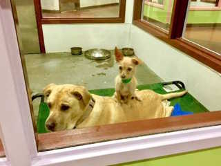 Bonded Bonnie and Clyde find forever home