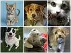 PHOTOS: 25 pets to adopt in the Valley right now