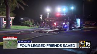 Family pets rescued from house fire in Chandler