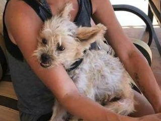 Foster dog found after weeks in the desert