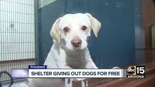 Free dog adoptions at Maricopa County shelter