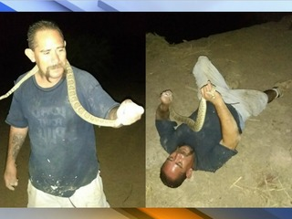 Arizona man bitten in face by rattlesnake