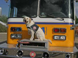 Glendale FD's crisis canine passes away