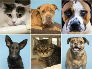 PHOTOS: 30 pets up for adoption in the Valley