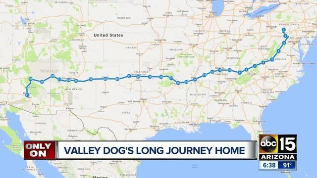 Dog Tv Show Pittsburgh