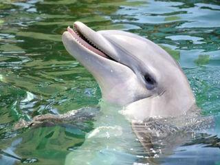 Female dolphin dies at Dolphinaris Arizona