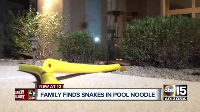 Buckeye family reports finding rattlesnakes inside pool noodle