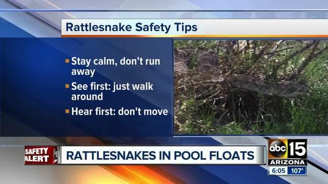Buckeye family finds rattlesnakes inside p