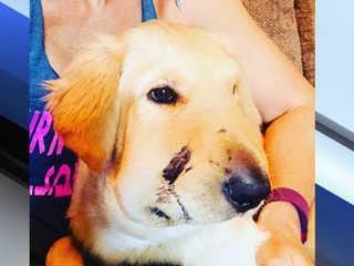 Good boy: Dog saves owner from rattlesnake bite