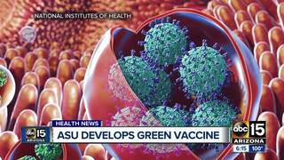 Norovirus vaccine made possible by ... tobacco?