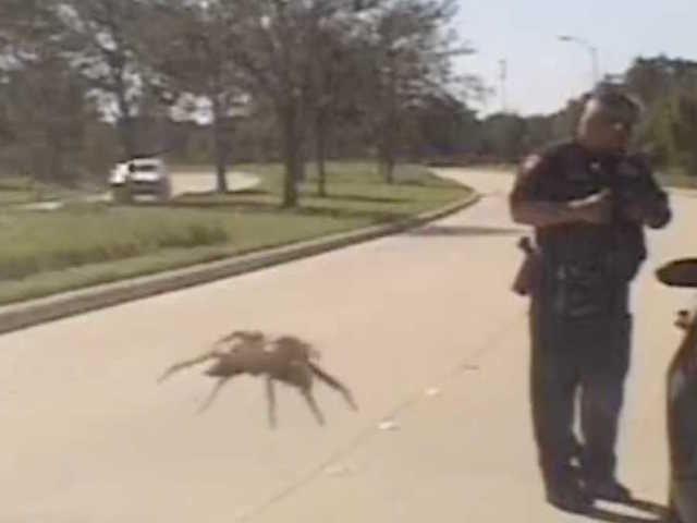 Giant spider appears on Texas police dash cam [VIDEO]
