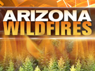 Skeleton Fire burns 90 acres near AZ-NM border