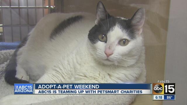 Kitten flea medicine petsmart