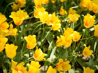 AAA: Best places to see spring wildflowers in AZ