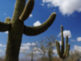 Microchips helping to prevent cactus poaching