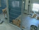 Nearly 1,000 pets clog Maricopa County shelters
