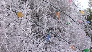 SATURDAY: Tumbleweed Tree lighting in Chandler