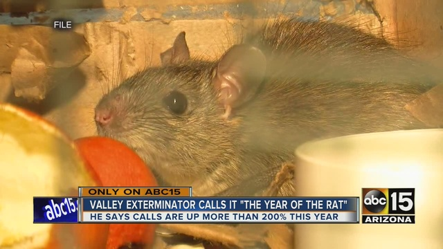 Lovely Valley Pest Control Company Says Roof Rat Calls Up 200 Percent In 2016